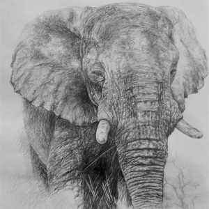 B_M_Elephant.jpg