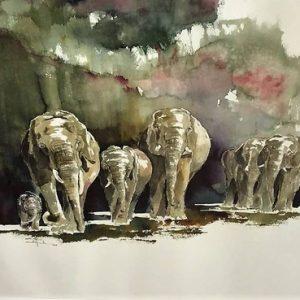 Elephants Green Wildlife