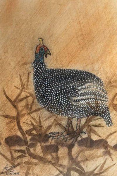 Helmet-Guinea-Fowl-2-batgqo (1)