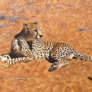 Reclining-Cheetah