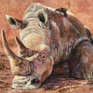 Rhino Pause