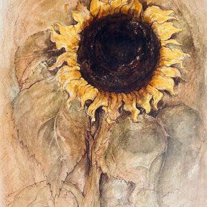 The-Sunflower