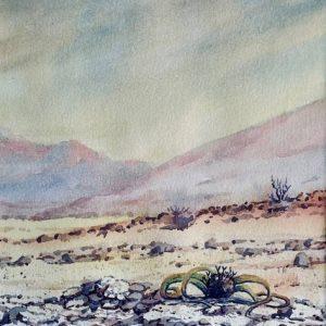 Welwitschia landscape
