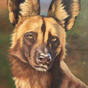 blue wild dog painted wolf wildlife