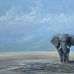 desert elephant dry riverbed wildlife