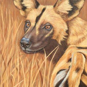 painted wolf wild dog wildlife