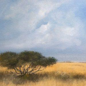 shepherds tree landscape