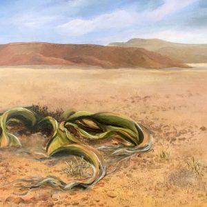 welwitschia namib desert landscape