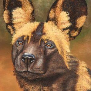wild dog painted wolf wildlife