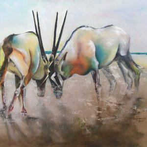 wildlife oryx etosha colour